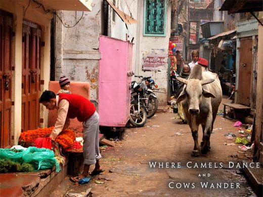 Trip to India. Varanasi. Photo: Adam Taylor Smith